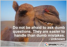 Do not be afraid to ask dumb questions. They are easier to handle than dumb mistakes.