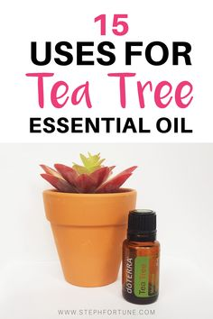 Tea tree essential oil (also known as melaleuca) is a powerful cleanser and great for the skin, check out these awesome ways you can use Tea Tree Essential Oil Melaleuca Essential Oil, Essential Oil Diffuser Blends, Tea Tree Essential Oil, Essential Oil Uses, Tea Tree Oil Uses, Tea Tree Oil For Acne, Oils For Ear Infection, Doterra Tea Tree, Diy Natural Beauty Recipes