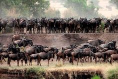 The Great Wildebeest Migration from Lemala Safari Camps