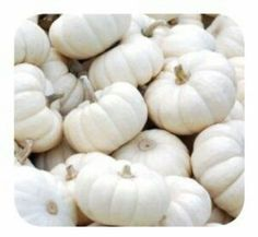 Gold Canyon White Pumpkin Lumie And Heritage