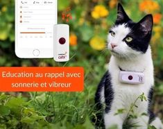Collier traceur GPS pour chat Maine Coon, Son Chat, Cat 2, Night Out, Baby Fat, Animaux