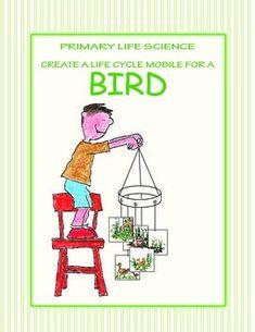Please pleasee i need help!!!!! biology coursework?