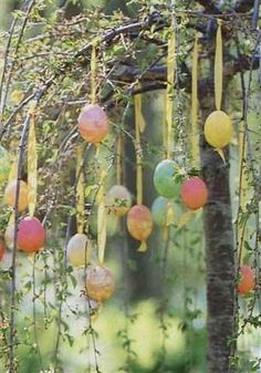 Ribbon Hung Eggs in the Trees. We do this nearly every year on a little sprig of a tree in a vase on the coffee table.