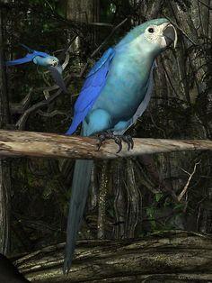 Stunning! Spix's Macaw: