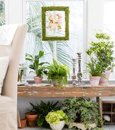 Bloom Room Moss Covered Frame   Garden Projects
