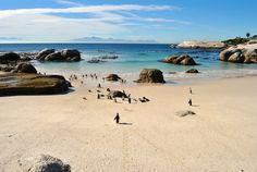Boulder's Beach ed i suoi pinguini #Sudafrica