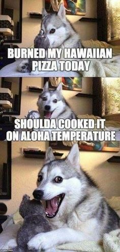 Haha thats a funny one doggo! - Funny Husky Meme - Funny Husky Quote - Haha thats a funny one doggo! The post Haha thats a funny one doggo! appeared first on Gag Dad. Pun Dog Meme, Bad Pun Dog, Dog Jokes, Crazy Funny Memes, Really Funny Memes, Stupid Funny Memes, Funny Relatable Memes, Haha Funny, Puns Hilarious