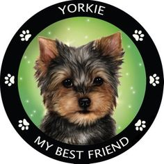 Yorkshire Terrier Yorkie My Best Friend Dog Breed Magnet Yorkies, Yorkie Dogs, Terrier Mix, Pitbull Terrier, Terrier Puppies, Best Dog Breeds, Best Dogs, Love Your Pet, Aggressive Dog