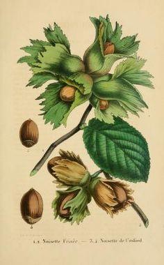 Vol. 3 (1852-1853) - Belgique horticole. - Biodiversity Heritage Library