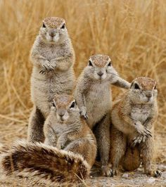 Squirrel gang posing for photo
