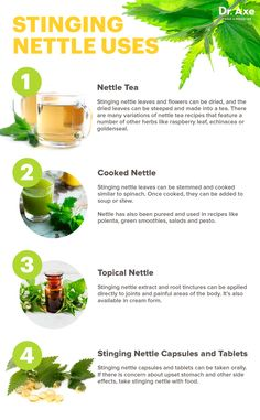 Stinging nettle uses - Dr. Axe http://www.draxe.com #health #holistic #natural