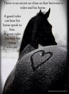 Horses: For the love of my horse ... We speak a special language.