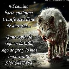 A Wolf thing Wolf Life, Wolf Quotes, Art Quotes, Dark Images, Wild Wolf, Wolf Spirit, Motivational Phrases, Lone Wolf, Spanish Quotes