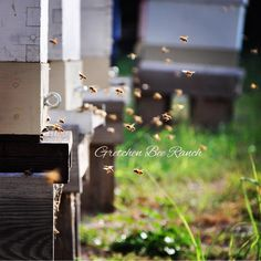 Stunning image of bee yard from Gretchen Bee Ranch.