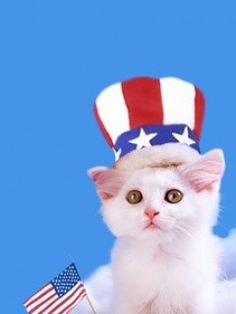 Happy 4th of July from Hepcatsmarketing.com - Cat of the day Photos! Happy Wednesday Too! - http://blog.hepcatsmarketing.com - check out our blog network for more cute like this!
