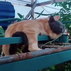 Ideas cats and kittens sleeping dogs for 2019 Cute Funny Animals, Cute Baby Animals, Funny Cats, Wild Animals, I Love Cats, Crazy Cats, Kittens Cutest, Cats And Kittens, Kitty Cats