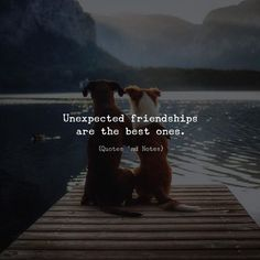 Unexpected friendships are the best ones. via (http://ift.tt/2iHs3o9)