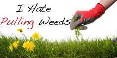 How to take care of the weeds in your Christian life https://oldpathsjournal.com/i-hate-pulling-weeds/