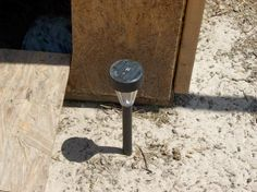 Use a solar light inside the chicken run to attract bugs for the chickens to eat
