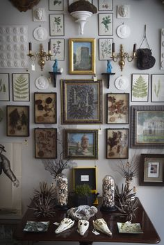 cabinet of curiosities - Google Search