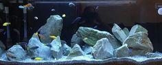 An excellent hardscape for mbuna by Chris Haymes. Cichlid Aquarium, Diy Aquarium, Aquarium Design, Aquarium Fish Tank, Aquarium Garden, Planted Aquarium, Malawi Cichlids, African Cichlids, Cool Fish Tanks