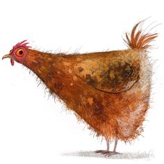 Wiebke Rauers Illustration Character chicken rooster hens hns illustration books me love best! Chicken Illustration, Bird Illustration, Illustrations, Friends Illustration, Animal Sketches, Animal Drawings, Chicken Art, Chicken Animal, Pet Chickens