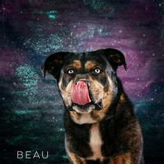 """02/11/17-HOUSTON - Robyn Arouty 25 mins · """"The main thing is.. My EYES rock the galaxy!"""" Beau is available for adoption through Best Friends Furever. bffurever@yahoo.com"""