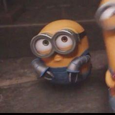 Minions Bob, Minions Cartoon, Minion 2, Minions Images, Cute Minions, Minion Movie, Minion Jokes, Minion Pictures, Minions 2014