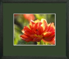 Blumenbild-Kunstdruck und Leinwandbild feuerroter Tulpe