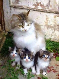 Cat Family - Don't Let The World Of Cats Confuse You. Read This Expert Advice Today! - Cat and Kittens Cute Cats And Kittens, I Love Cats, Crazy Cats, Kittens Cutest, Fluffy Kittens, Fluffy Cat, Pretty Cats, Beautiful Cats, Animals Beautiful