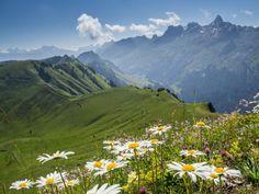 Höhenwege in der Schweiz: unsere Favoriten - als nuff! Alps, Switzerland, Hiking, Mountains, Places, Nature, Travel, Outdoor, Sheep