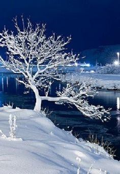 Icy Winter........