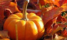 Coltivare l'orto in autunno: consigli e preparativi