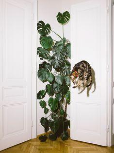 """Jumping Cats"" by Photographer Daniel Gebhart de Koekkoek - BOOOOOOOM! - CREATE * INSPIRE * COMMUNITY * ART * DESIGN * MUSIC * FILM * PHOTO * PROJECTS"