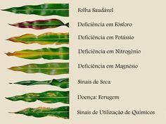 """A """"linguagem"""" das plantas :: Guia visual de deficiência de nutrientes. Fonte: https://www.facebook.com/tudosobreplantas/?fref=photo"""