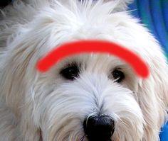 Trimming Eyes - Help, Tips? – DoodleKisses.com