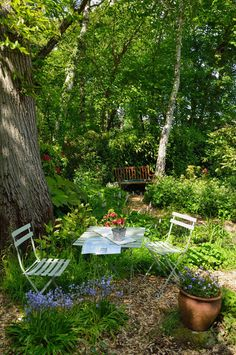 "Ready For Tea - in a woodland garden | In a private Sussex garden open to the public under the NGS ""Yellow Book Scheme"""