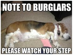 funny basset hound memes - Google Search