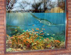 Raamfolie koraalrif