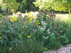 Rain Gardens | Suggested plant material (trees, shrubs and perennials) for the three rain garden zones.