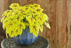 Perennial Resource : The Complete Guide to Growing Perennials in Containers
