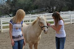 Villa Ladera - Equine Assisted Therapy - coming soon!
