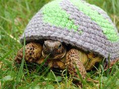 Turtle cozies!