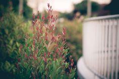 #balcony #flower #green #outside #park #red #spring