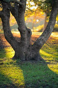 hueandeyephotography: Multi-Trunked Tree, Hampton Park, Charleston, SC © Doug Hickok All Rights Reserved More here…