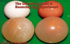 Experiment met eieren. Een stuiterend ei!! Wow!