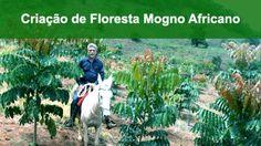 Curso de florestas de mogno africano. Capacite-se com as melhores práticas com o Instituto Brasileiro de Florestas.