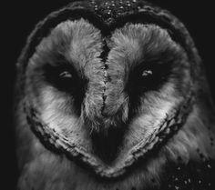 Heart shaped owl face