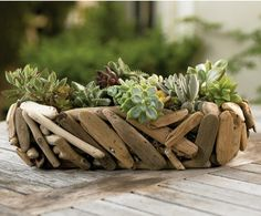 Succulentes mises en valeur par du bois flotté
