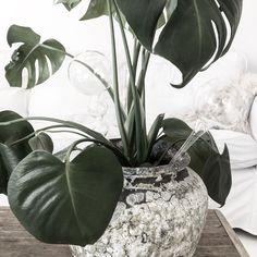 Vacker, dekorativ och smart blomvattnare i glas.Fyll med vatten och stick ner i blomjorden.Denna variant är slät i glaset.Mått: 9 x 26